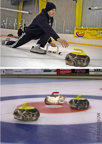 Curling kittens